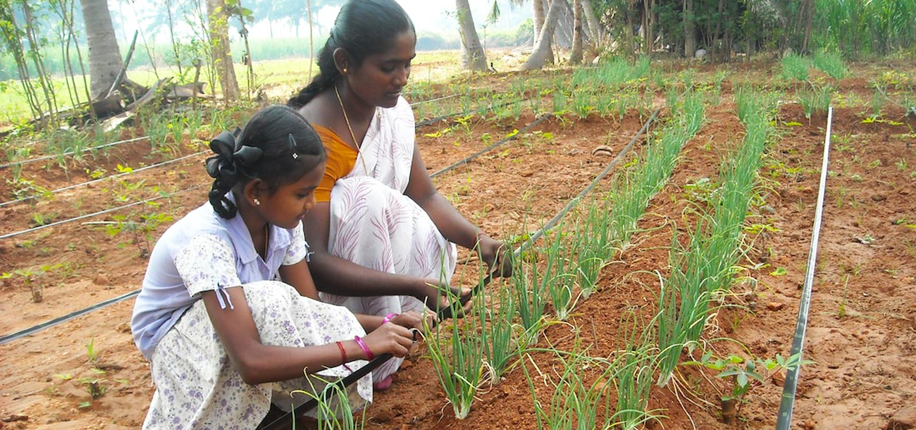 Shanti's Story: Conserving water, increasing yield