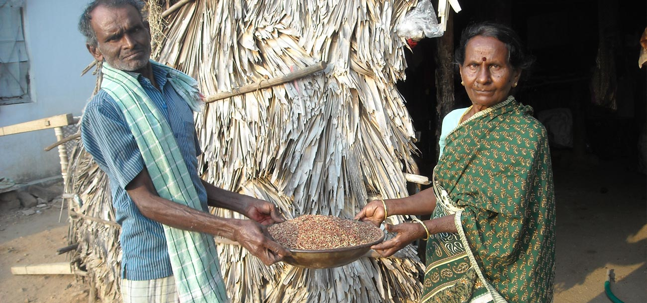 Kamalam's Story: Growing millets to buy a cow