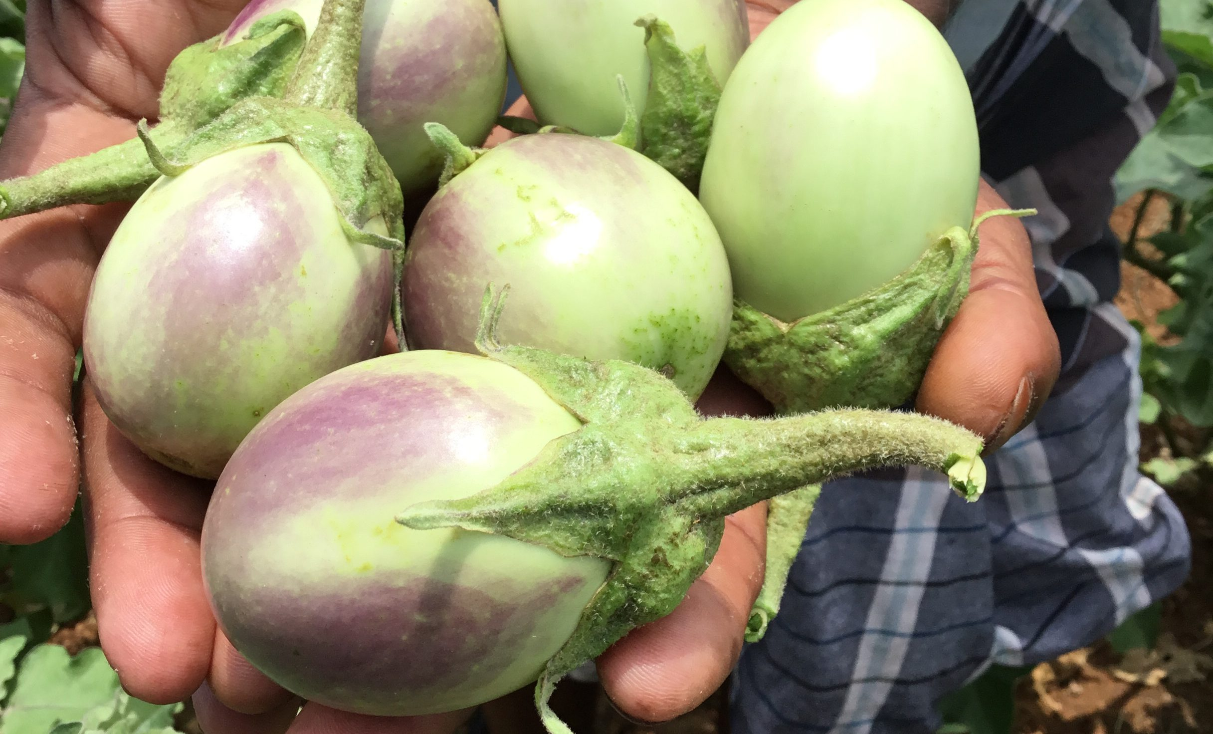 Project SEED : Reaping the benefits of organic farming in Tamil Nadu